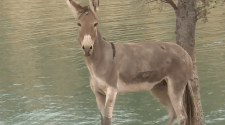 Injured Donkey Stranded On Island for Years