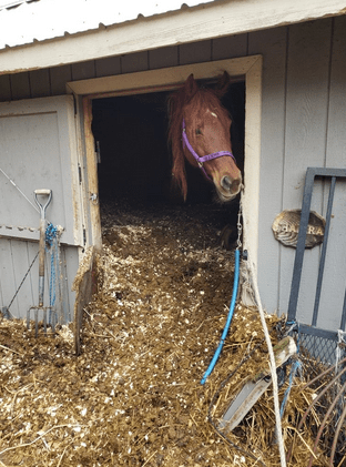 Two Horses Buried in Manure Recovering Slowly