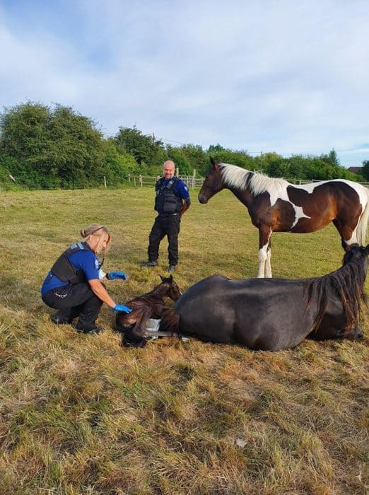 Police Welcome Foal