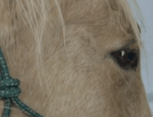 Couple Sentenced for Dragging Horse Behind Truck