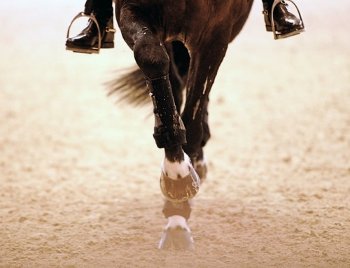 FEI Hands Out Rider Suspensions